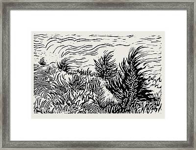 Eastern Red Cedar Framed Print
