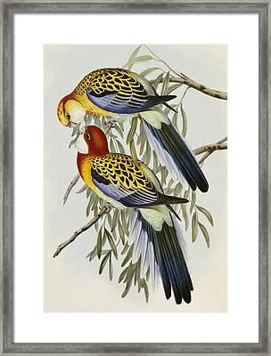 Eastern Rosella Framed Print by John Gould