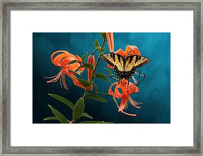 Eastern Tiger Swallowtail Butterfly On Orange Tiger Lily Framed Print
