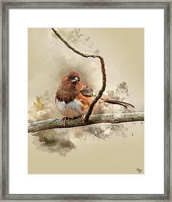 Bird Art - Eastern Towhee - Female Framed Print by Ron Grafe