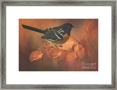 Spotted Towhee In Autumn Framed Print by Janette Boyd