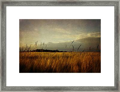 Framed Print featuring the photograph Eastern Wheat by Gary Smith