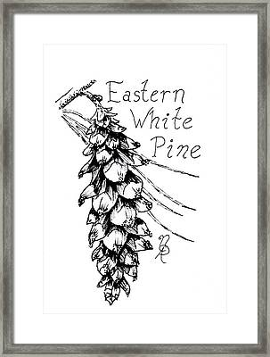 Eastern White Pine Cone On A Branch Framed Print