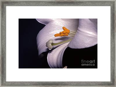 Easter's Lily Framed Print by Edward R Wisell