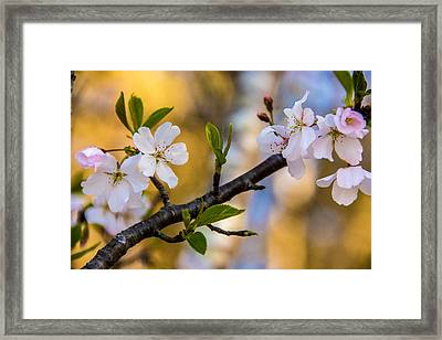 Easy Elegance Framed Print