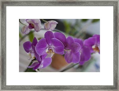 Eat More Orchids Framed Print by Kevin  Sherf
