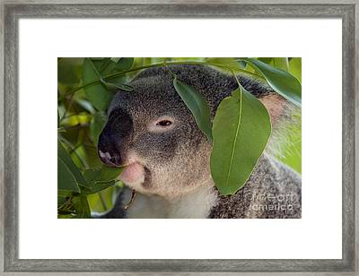 Eat Your Greens Framed Print by Mike  Dawson