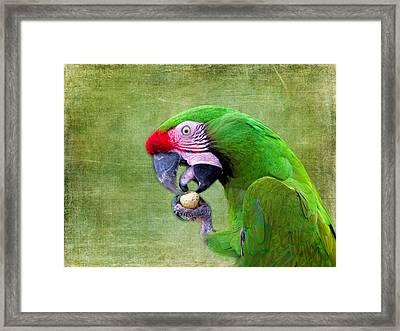 Eating A Peanut Framed Print by Lynn Bolt
