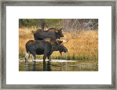 Eating And Strolling Framed Print
