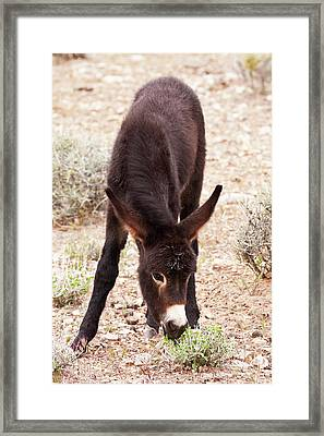 Eating Green Framed Print