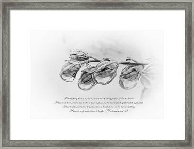 Ecclesiastes 3 Framed Print