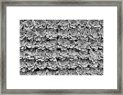 Framed Print featuring the photograph Echeveria by Tim Gainey
