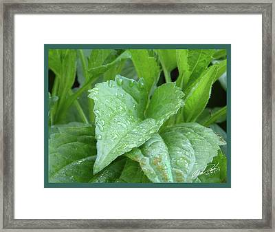 Echinacea After The Rain I Framed Print