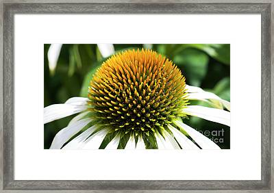 Framed Print featuring the photograph Echinacea - Head And Shoulders by Wendy Wilton