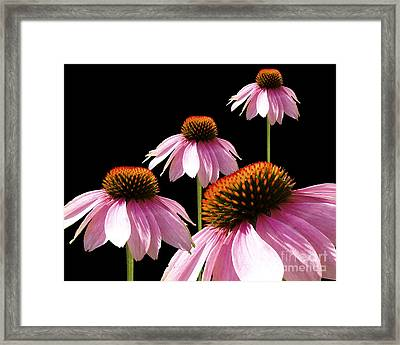 Echinacea In Half  Framed Print by Cathy  Beharriell