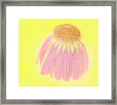 Framed Print featuring the photograph Echinacea In Pink by Linde Townsend