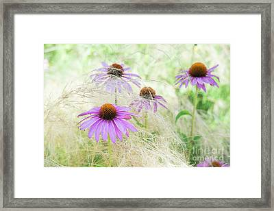 Echinacea In The Grass Framed Print by Tim Gainey