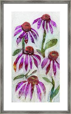 Echinacea Framed Print by Julie Maas
