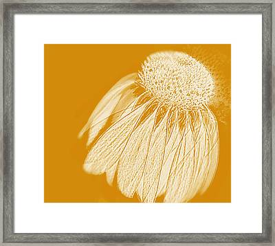 Framed Print featuring the photograph Echinacea by Linde Townsend
