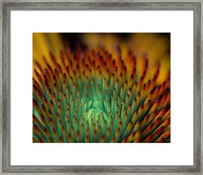 Echinacea Macro Framed Print