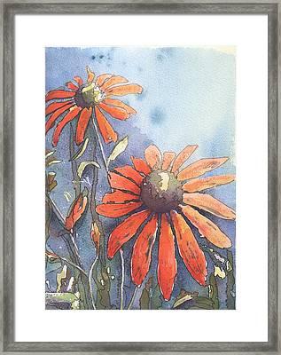 Echinacea Framed Print by Robynne Hardison