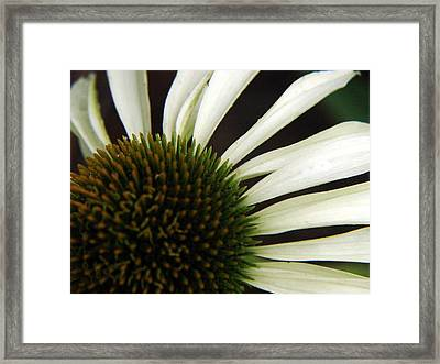 Echinacea Framed Print by Priscilla Richardson