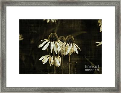 Echinacea Framed Print by Terrie Taylor