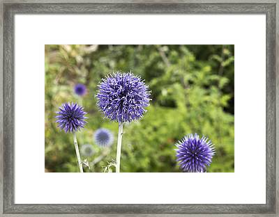 Curious Echinop Peeking At The Camera Framed Print by Helga Novelli
