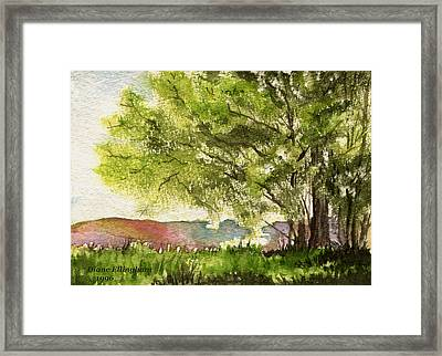 Echoes Of Summer Framed Print by Diane Ellingham