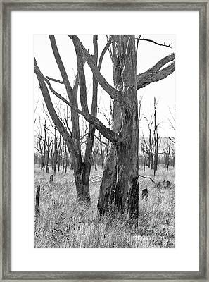 Echoes Of The Past Framed Print by Linda Lees