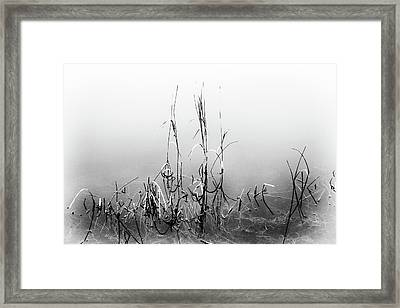 Echoes Of Reeds 1 Framed Print