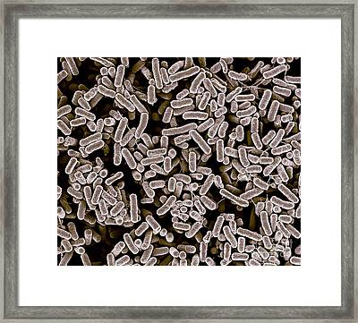 E.coli 1c Framed Print by Natures geometry