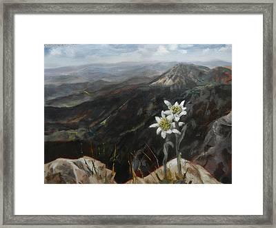 Edelweiss Moment Framed Print