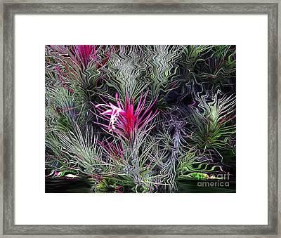 Eden Framed Print by Laurel D Rund