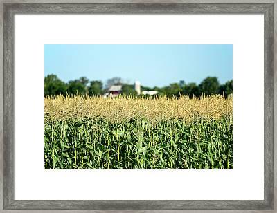 Edge Of Field Of Corn Framed Print by Todd Klassy