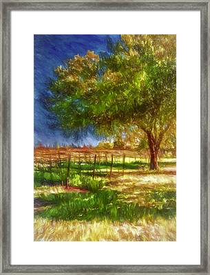 Edge Of The Vineyard Framed Print by John K Woodruff