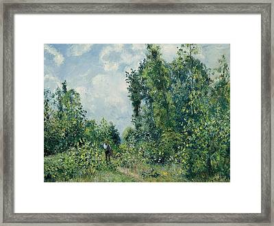 Edge Of The Woods Framed Print