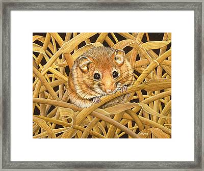 Edible Dormouse Framed Print by Ditz