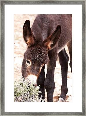 Edibles Framed Print by James Marvin Phelps