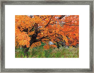 Edna's Tree Framed Print