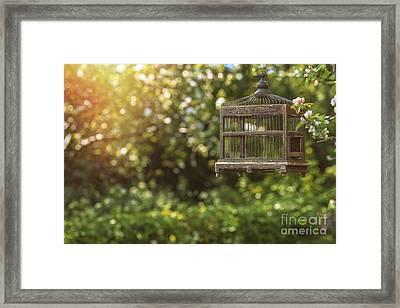 Edwardian Birdcage Framed Print