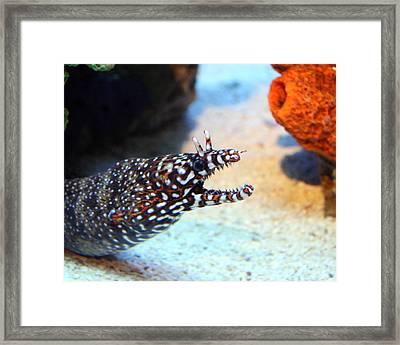 Eel Framed Print by George Jones