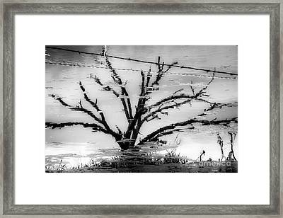 Eerie Reflections Framed Print
