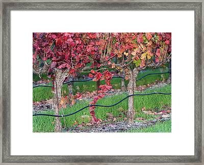Effervescent Framed Print