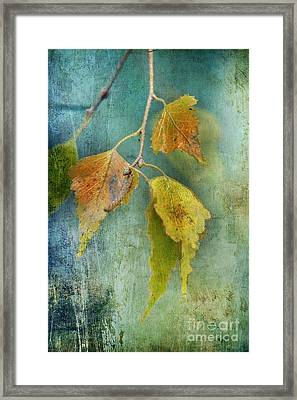 Effeuillantine - 15t12 Framed Print by Variance Collections