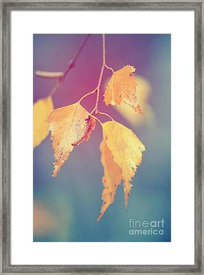 Effeuillantine - 17a Framed Print by Variance Collections