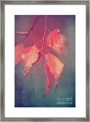 Effeuillantine - 46 Framed Print by Variance Collections