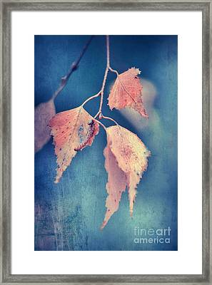 Effeuillantine -47t3 Framed Print by Variance Collections