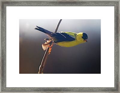 Effortless Framed Print