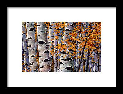 Aspen Framed Prints